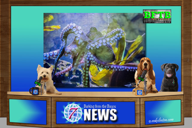 BFTB NETWoof News set with octopus on back screen