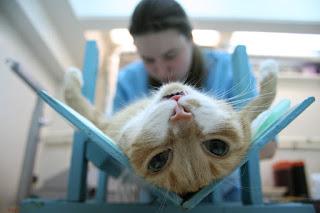 Почему нужно стерилизовать животных