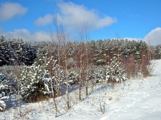 czas zimy, styczeń, zimno, las