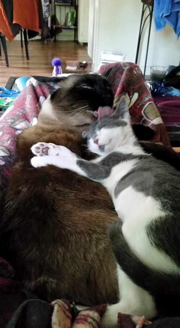 Funny cats - part 196, best cat picture, cute cat pictures, adorable cat photos