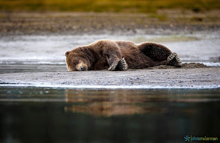 Foto beruang tidur