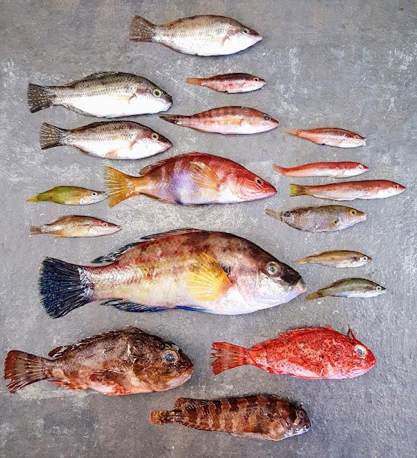 Les poissons de roche et autres petites pêches.