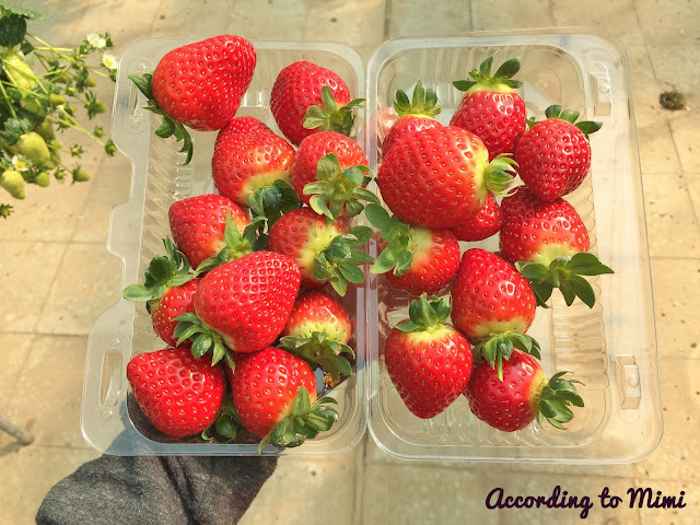 Punnet of strawberries from the Blue Lake Farm