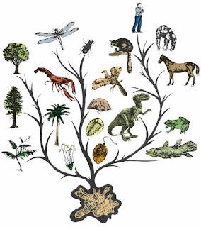 evolution_theory_tree_scientific_fact