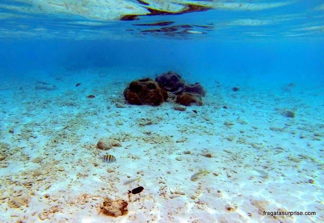 Curaçao - mergulho na praia de Porto Marie