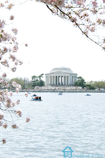the tidal basin with the Jefferson Memorial in the background