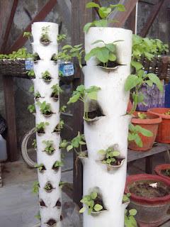 Berkebun sayuran dipekarangan