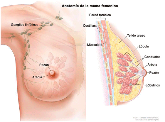 Masajes Genova: Drenaje linfatico para mamas.