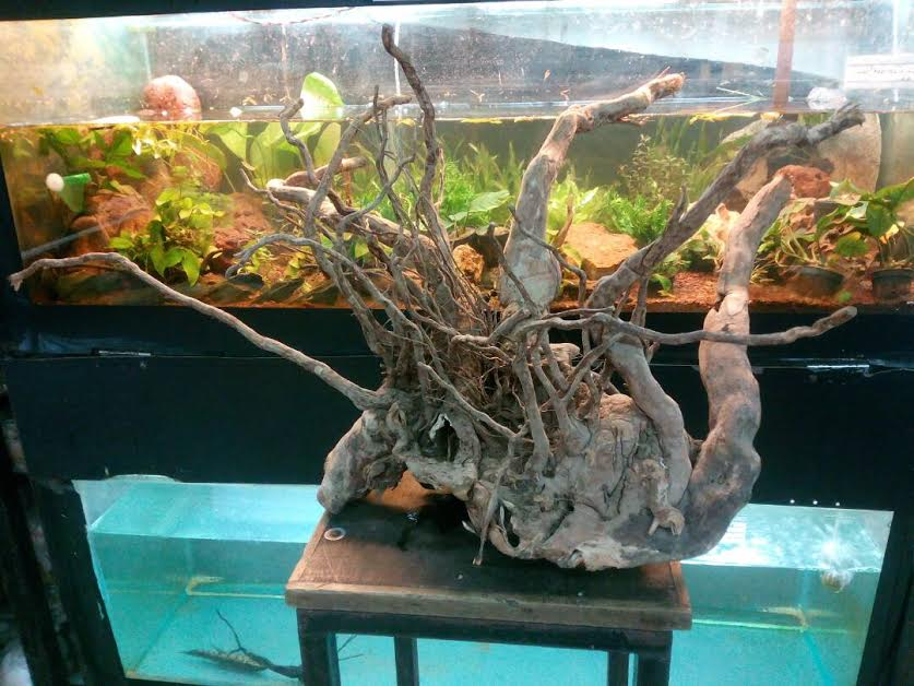 Joe 39 s aquaworld for exotic fishes mumbai india 9833898901 for Aquarium wood decoration