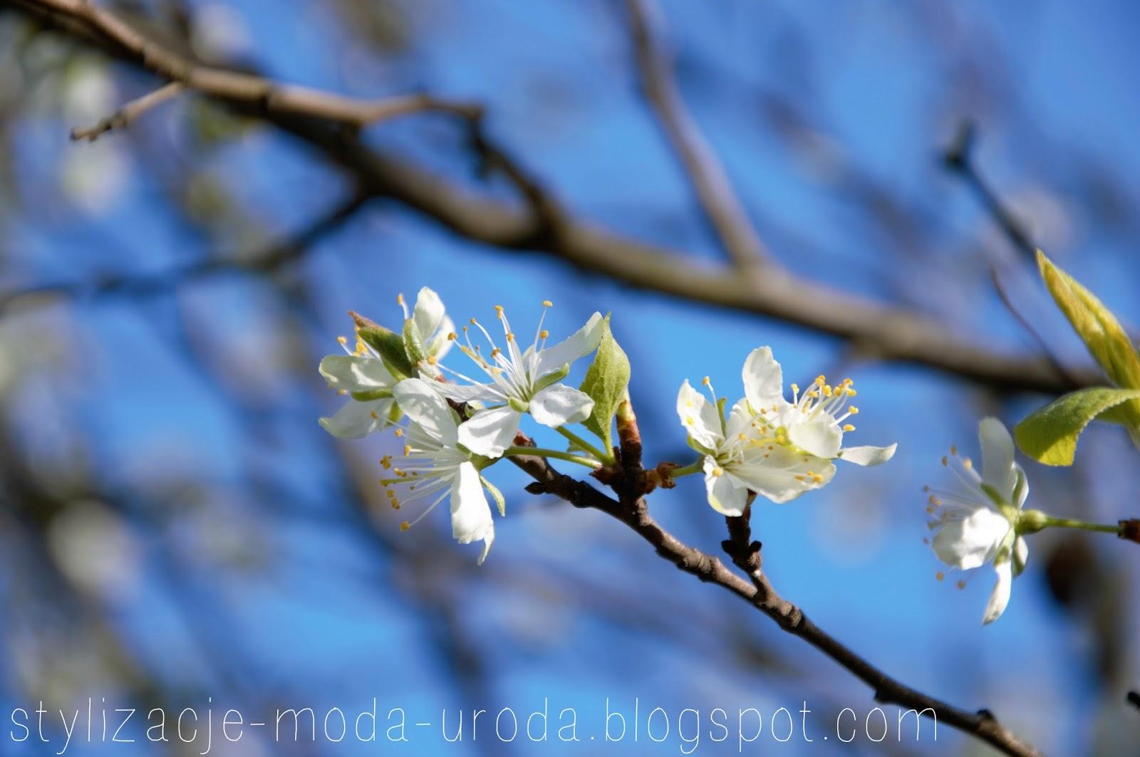 wiosna oznaki