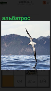 Над водой парит альбатрос, крылом задевая воду