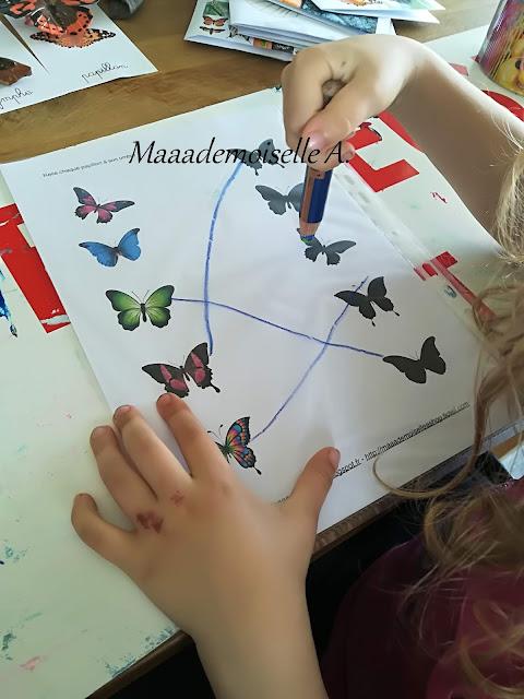 || Nos activités sur les papillons
