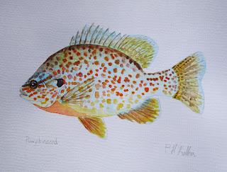 Pumpkinseed, Sunfish, Pat Kellner, P. H. Kellner, Fishing Art, Fly Fishing Art, Texas Freshwater Fly Fishing, TFFF, Fly Fishing Texas, Texas Fly Fishing