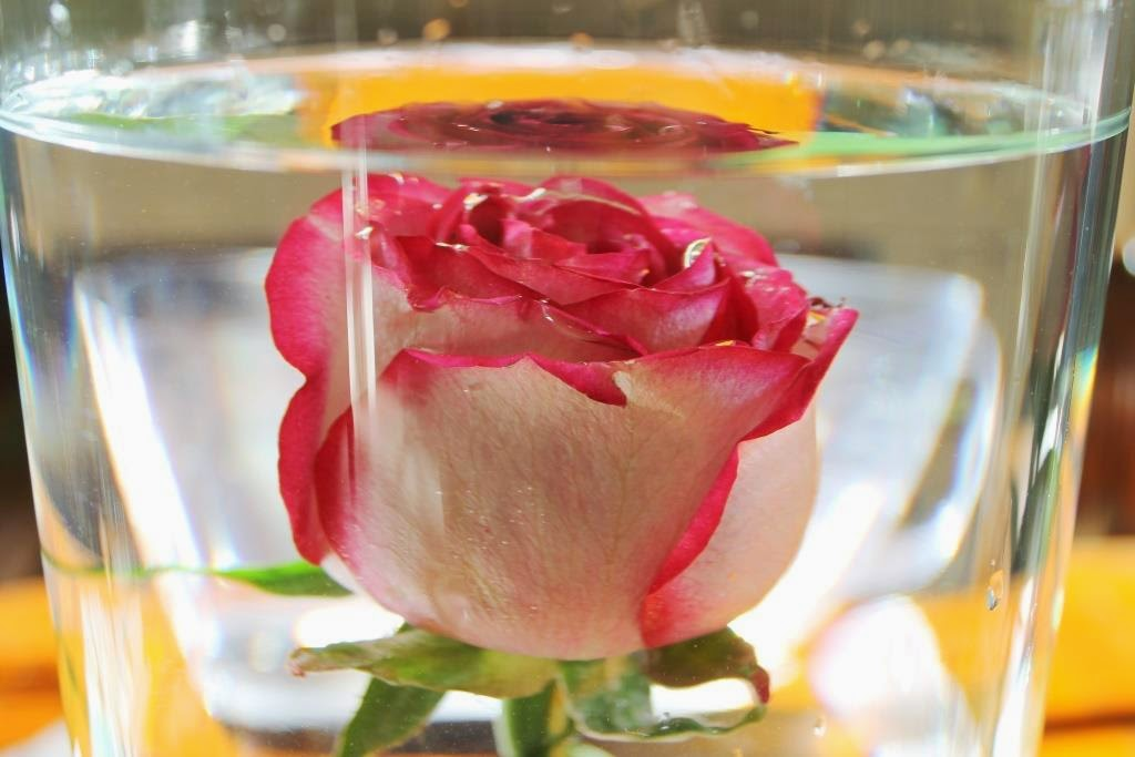How To Submerge Flowers