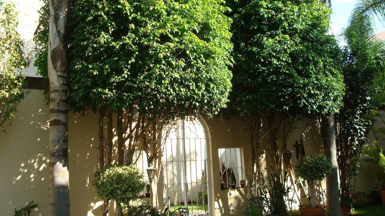 Sancarlosfortin sancarlosfortin ficus en el jardin for Jardin ficus quilpue