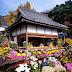 Септември в Япония. Месецът на императорското цвете