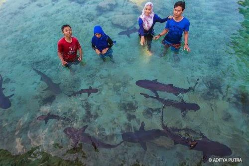 penakaran hiu karimunjawa