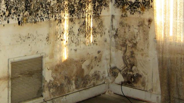 Ini Cara Hilangkan Jamur di Tembok Rumah, Dijamin Manjur