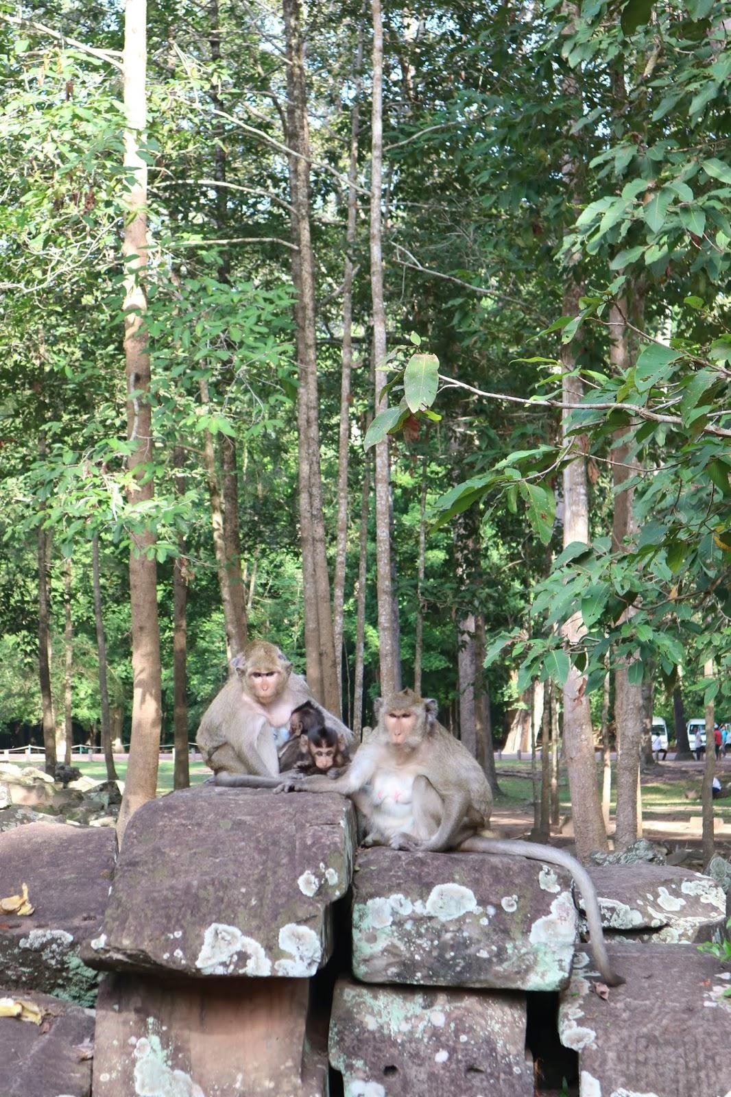 Monkeys outside Bayon Temple