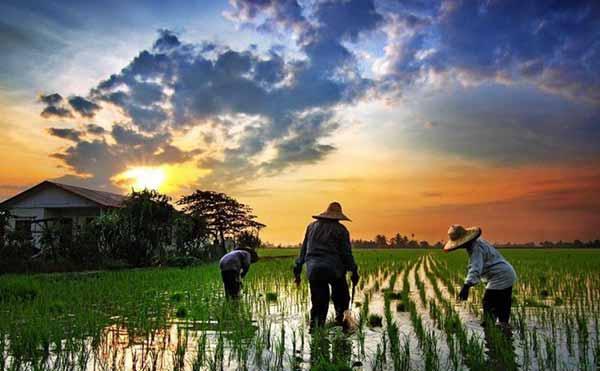 RKP Desa - Rencana Kerja Pemerintah Desa