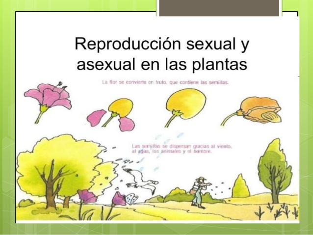 Reproduccion sexual de las plantas definicion wikipedia