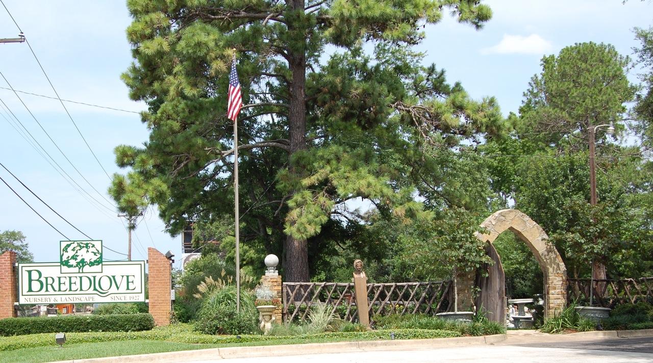 Jeannie S Fairy Rose Louisiana Garden Breedlove Nursery In Tyler Texas