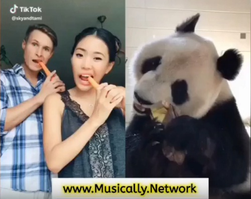 Funny Panda Crunch Challenge on Tik Tok