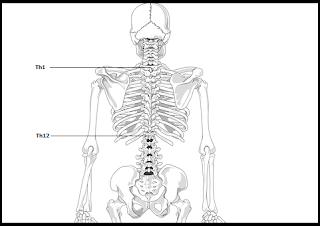 Bolesti chrbtice: Deformácie chrbtice príčina mnohých