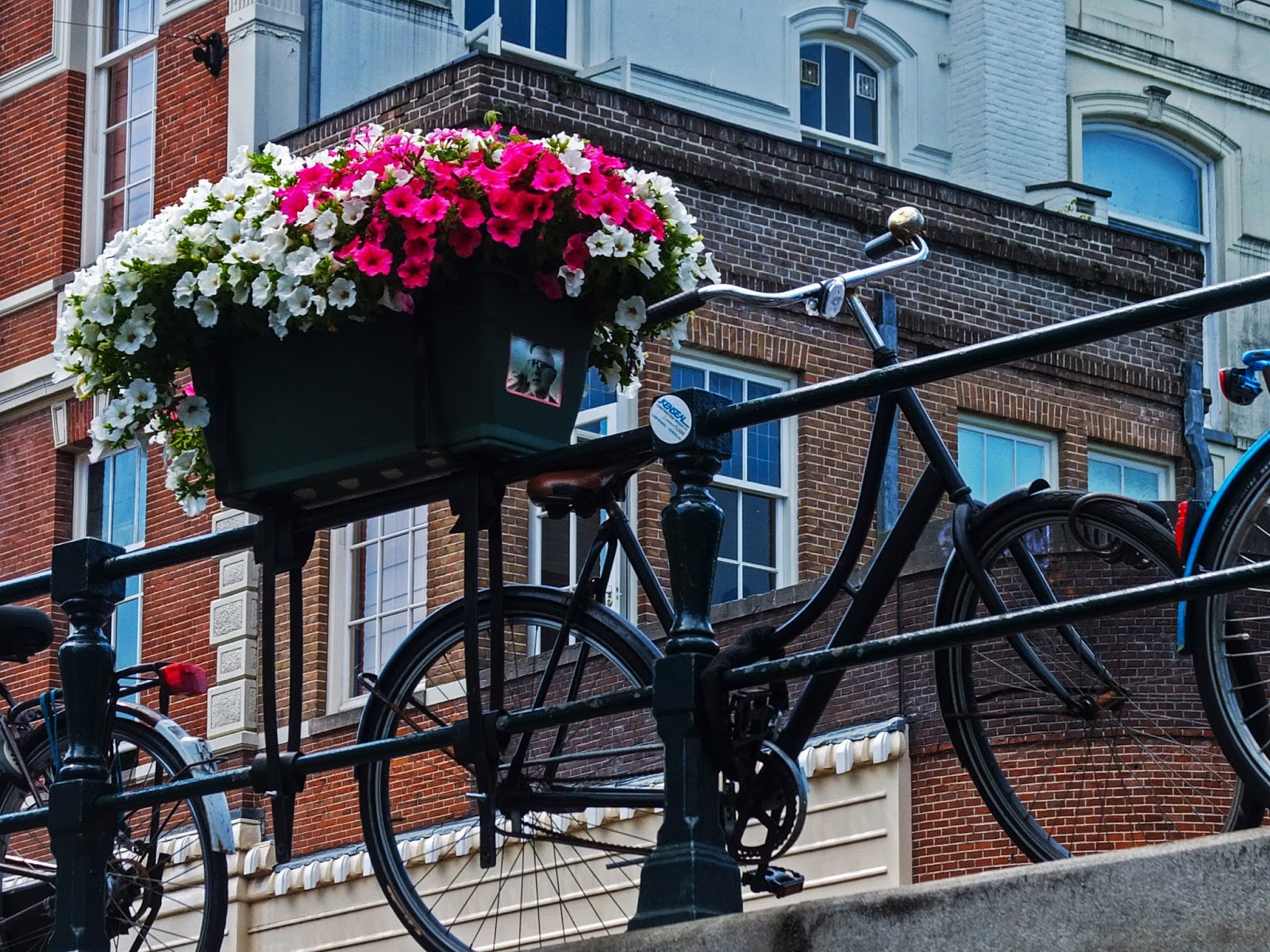 Plant pot of petunias hanging of a railing with bicycles leaning against the railing.
