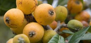 فوائد فاكهة الأسكدنيا لجسم الانسان