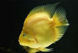 Download Mewarnai Gambar Ikan