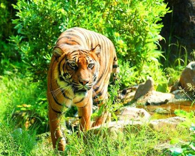 Top 3 Causes Why pobitora wildlife sanctuary is famous for