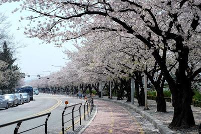 Yeouido Park - Salika Travel - Paket Tour 5D3N Korea