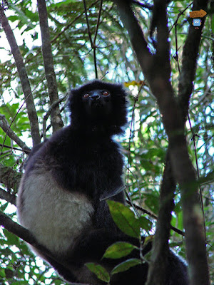 Madagascar: Ranomafana