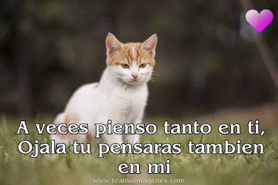 Imágenes de gatitos tiernos con frases para whatssap