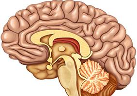 La adicción al smartphone es visible en los cerebros