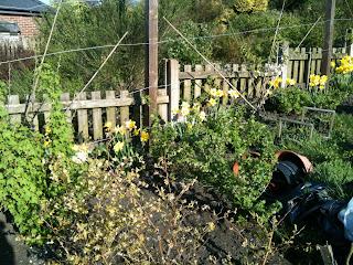 growing, life on pig row, gardening
