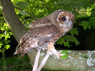 Istilah jesse dalam pemeliharaan burung hantu mengacu pada alat dari kulit untuk menyatukan dua sisi anklet ke swivel kaki burung hantu