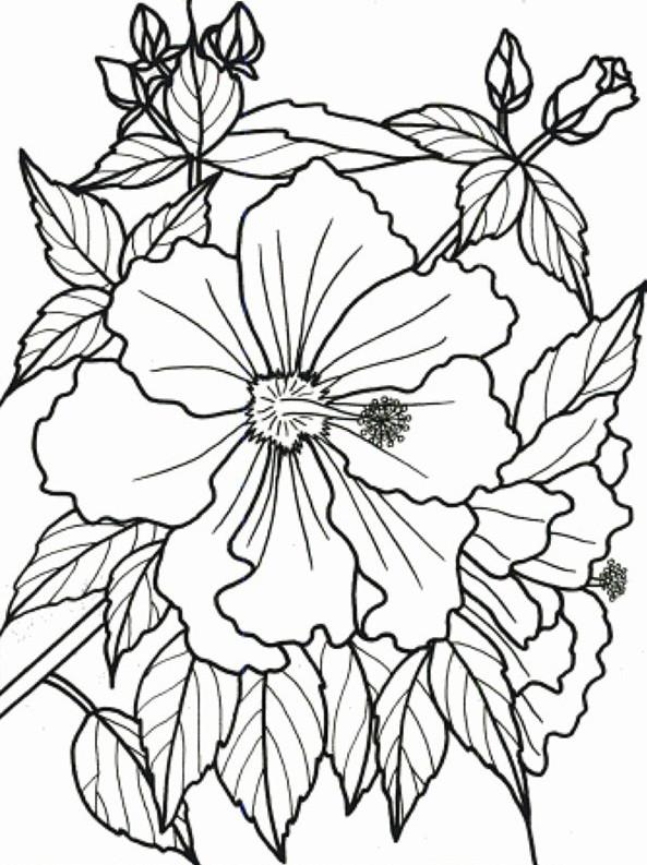 inspirasi baru 21 gambar mewarnai bunga melati