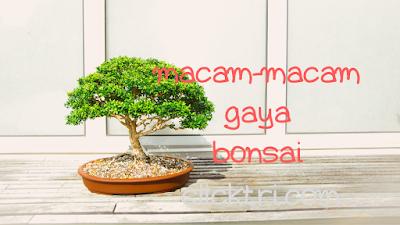 Bonsai serut, bonsai kelapa