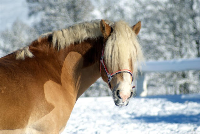 A Guide To Hypothyroidism In Horses