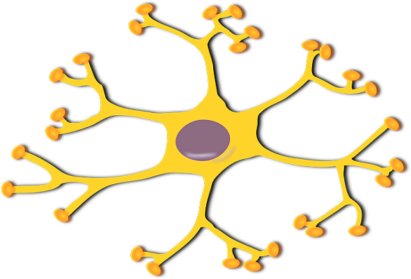 nervous-system-definition-تعريف-الجهاز-العصبي
