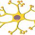 ما هو الجهاز العصبي ( تعريف - مكونات - وظائف )