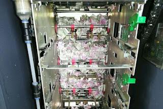 Ratos entram em caixa eletrônico e destroem R$ 66 mil em notas