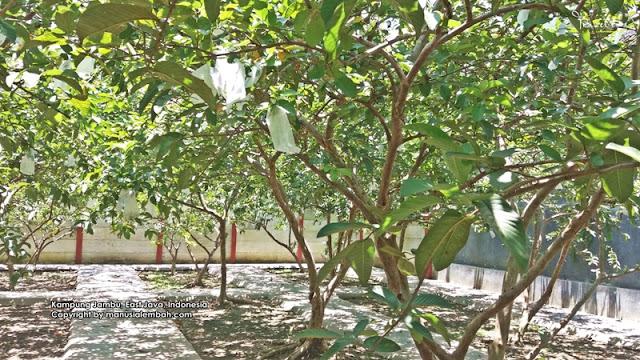Kampung Jambu Blitar