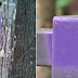 If You See A Tree Or Fence Painted Purple, It's Very Important That You Back Away Quickly