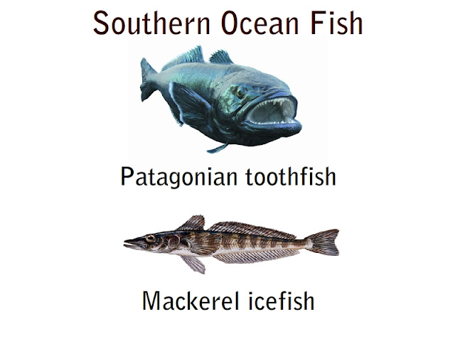 southern ocean fish