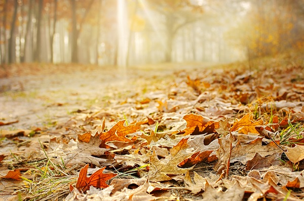 Risultati immagini per immagini di foglie secche