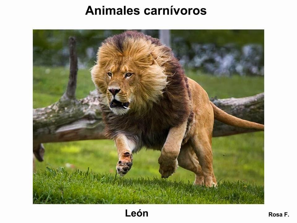 Maestra De Primaria Animales Carnivoros Vocabulario En Imagenes