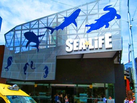 Sea Life Melbourne Aquarium Tempat menarik di melbourne australia untuk bercuti